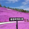 東藻琴の芝桜が満開だった話~まだ見てない人は急いで!~