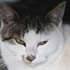望遠レンズを使って猫に寄ってみた。