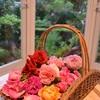 薔薇の姿、色、香りで幸せ気分
