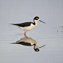 The Migratory Bird