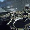 国立科学博物館で「大恐竜展 ゴビ砂漠の驚異」を見てきました