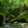 苔の回廊を歩く!支笏湖楓沢から登る樽前山・風不死岳登山の楓沢コースで深緑の絶景を楽しむ