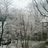 雪やこんこん(´▽`)ノ