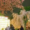 うえの桜まつり・夜桜(キモチ閲覧注意)