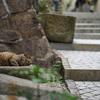 猫の街 〜 尾道
