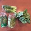 【たべもののこと】生活クラブの無農薬野菜『やさいBOX』のミニセット 2017年5月(18週〜20週)に届いたお野菜たち。(野菜ボックス)