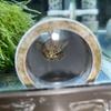 アイガンマナイっぽい子の産卵と色々すっとばしていきなりオーバーフロー水槽試運転開始