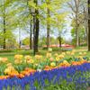 オランダ風花壇:チューリップフェア2