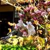 代々木第三の眼★ほしよみゆきの【2017年4月の占い予定】 4月上旬よりインパクト強しな星まわり