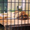 最近の京都市動物園