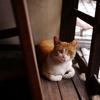 ねこレポート38「京都・京都生活工芸館 無名舎の猫」