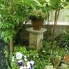 4月の終わりの庭の花
