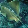 サンシャイン水族館で1.235匹の魚が大量死。。。