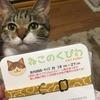 【購入レビュー】首輪を嫌がる猫ちゃんにオススメの優しい首輪