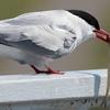 渡り鳥の移動距離と迷わず目的地に行ける理由!鳥は後ろに飛べるのか!