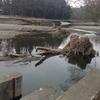 河の掃除?