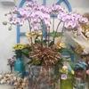 【台中生活】台中花市でお買い物!日本とは少し違った花で生活に彩りを!