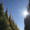 神宮外苑紅葉とランチ