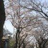 子供と楽しめる東京都葛飾区の花見スポット