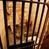 死囚獄(ししゅうごく)【現代の八つ墓村?凄惨な事件は進行中】