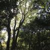 九大の森と樹芸の森を散策