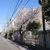 市内の桜を愛でに行く ~八幡山で昼食を~