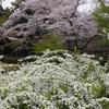 創造の森「石川県林業試験場樹木公園」