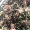生姜の室内保存