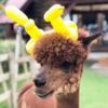 【アルパカ・パカイベント】クリスマス会