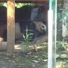 【今週のお題】上野の動物たち