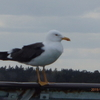 海外旅行珍しい体験~北欧・バルト海クルーズ:スウェーデンとフィンランドを往復