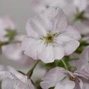 キラキラと、咲く