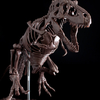 Imaginary Skeleton ティラノサウルス、パッケージ&付属解説小冊子のご紹介‼