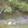 庭いじりの贅沢、濾過器「湧清水」その後