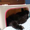 猫のキャリーバッグの粗相対策