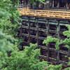雨降る新緑の清水寺