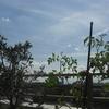 枯れたトネリコの樹を見ながら「人生はそんなにわるくない」と思ってみた日
