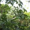 きょうの庭とおやつ