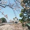 兼六園に石川門。今が見頃の金沢桜さんぽ