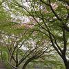 桜と新緑の荒神山