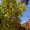 正暦寺へ紅葉を見に行きました ~望遠&広角・後編~