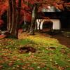 阿弥陀寺と蓮華寺の紅葉