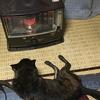 甲斐犬サン、ストーブと戦うの巻〜┗╬゚(゚`・益・´゚)゚╬┛負ケナイゾゥ‼️