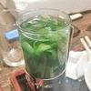 【東京赤羽  ろばたやき弥生】酒飲みの聖地赤羽で謎のニラ酒