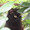 ああ、猫の瞳にピントが合わない!!