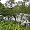 岳ノ木場溜池(長崎県大村)