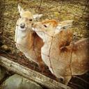 小鹿太郎の日記