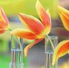 【富山】カラフルなチューリップで一足先に春気分💛チューリップ四季彩館