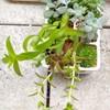 🌵多肉植物 100均のリモコン容器鉢🌵