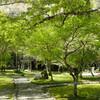 虹、絶景、お花畑。春の旧吉野街道をプチ縦走!